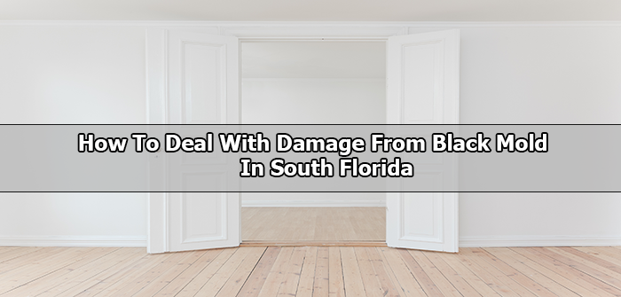 South Florida Black Mold Repair